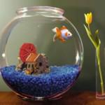 Маленькие аквариумные рыбки