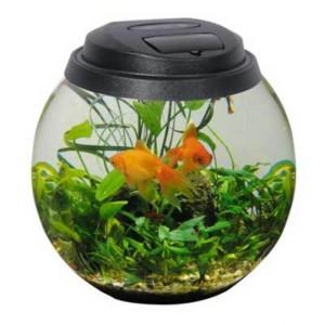 оформление круглого аквариума