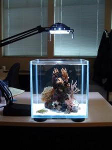 Мини-аквариум
