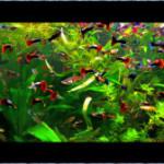 Видовой аквариум