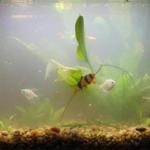 Пахнет вода в аквариуме