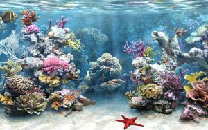 Морская аквариумистика