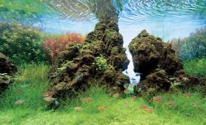 аквариумные камни