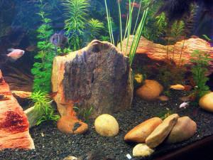 Камни в аквариуме