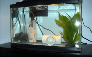Карантинный аквариум
