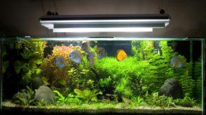 Power GLO для аквариума